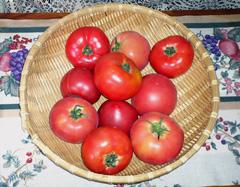 夏野菜の代表格「トマト」